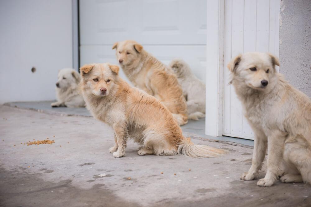 Korona virus na Kitajskem pušča za seboj mnogo brezdomnih živali