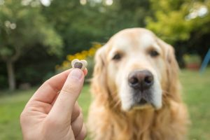 Nagrajevanje v pasjem svetu – kako učinkovito je?