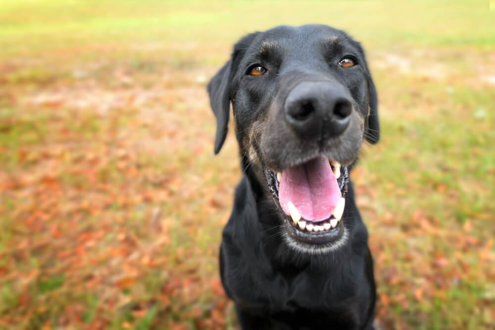 Parodontalna bolezen prizadene vsakega psa