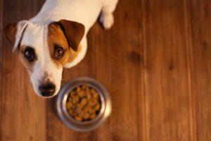 Pasja prehrana: V letu 2018 neskladnih več kot polovica deklaracij