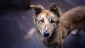 Picerija na škatle pic natisnila fotografije psov iz zavetišča