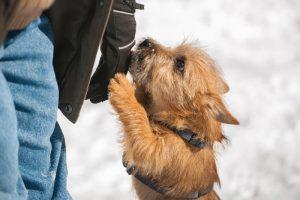 Skakanje po ljudeh: kako psa odvaditi takega pozdravljanja?