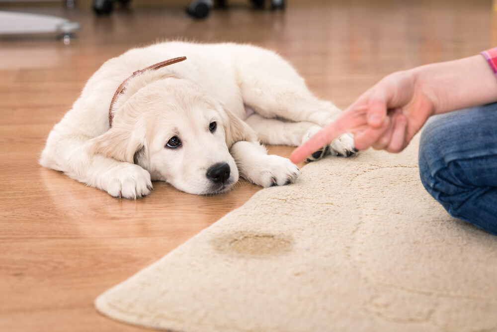 Sobna čistoča - kako se lotiti učenja?