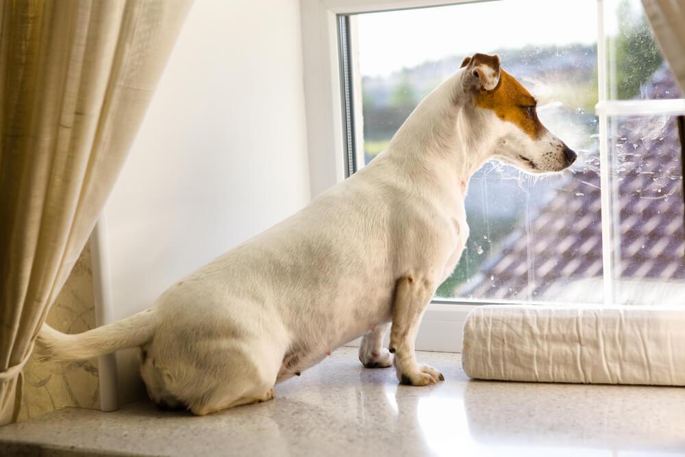 Južna Afrika prepovedala sprehajanje psov