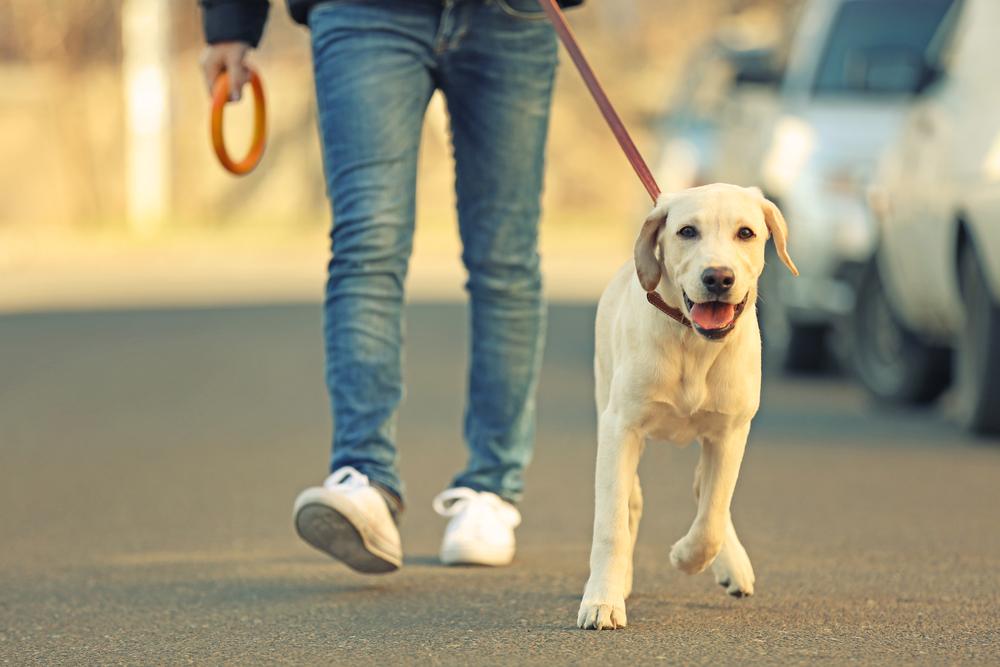 Smo v karanteni, toda psa lahko peljete na sprehod