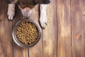 Surovi pepel v pasji hrani kot kazalec kakovosti