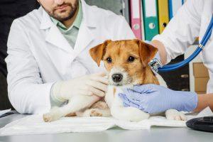 Nekatere veterinarske klinike sprejemajo samo nujne primere