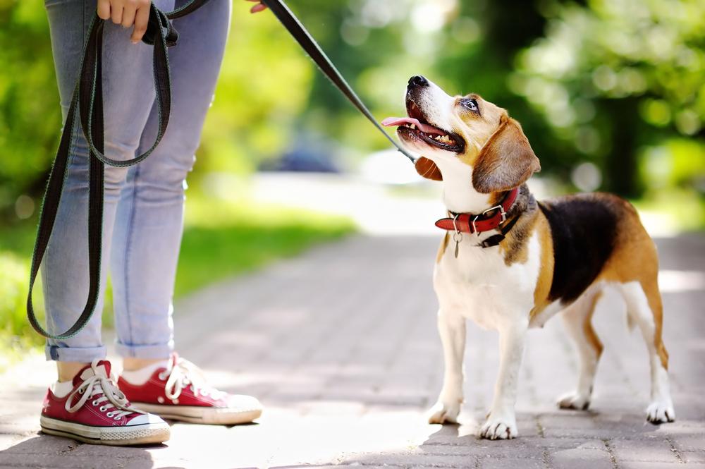 Veterinarska zbornica priporoča, da psov ne spuščamo s povodca