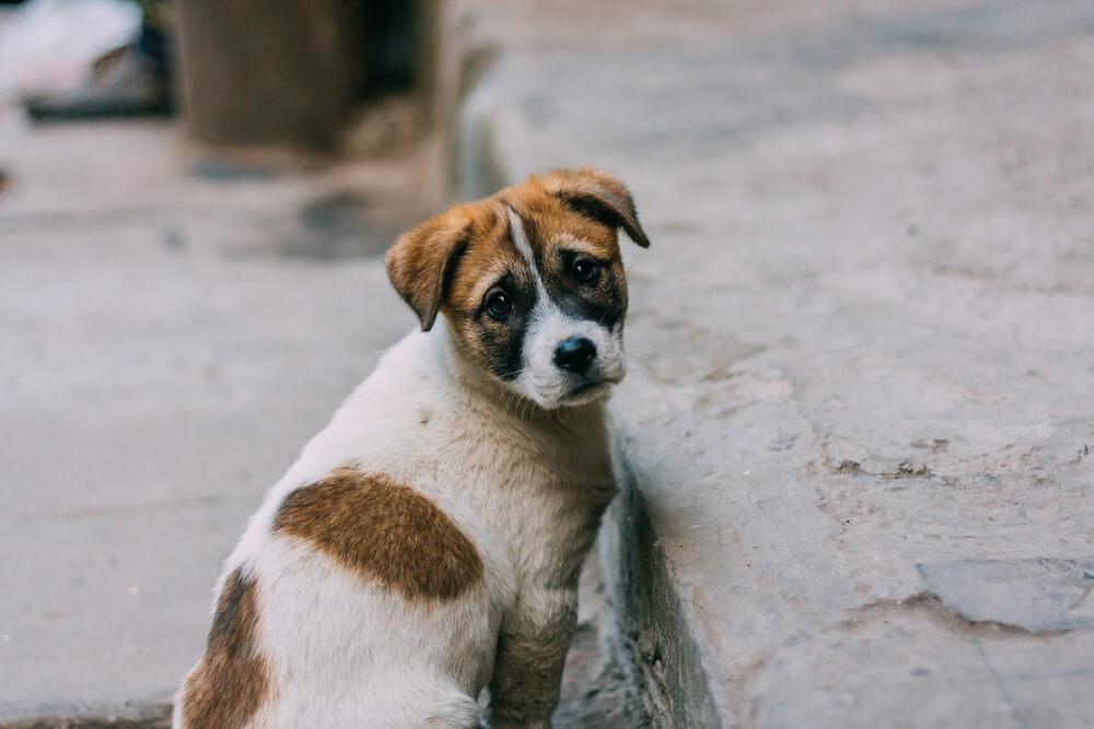 Ljudje vsepovsod v strahu pred okužbo zapuščajo svoje pse