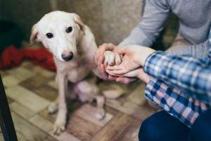 Zavetišče Ljubljana pripravljeno sprejeti živali hospitaliziranih skrbnikov