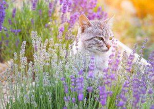 Zasadimo zeliščni vrt za notranjo mačko