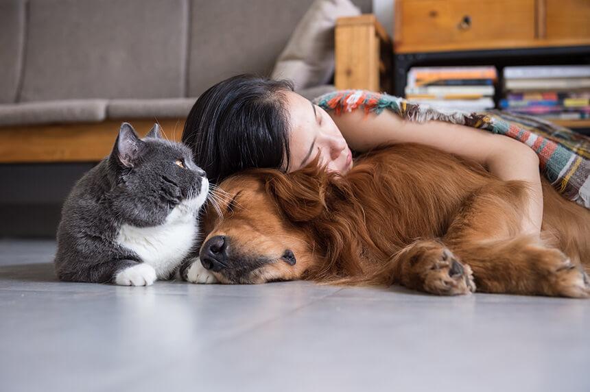 Bolhe in klopi – najbolj nadležne nadloge hišnih ljubljenčkov