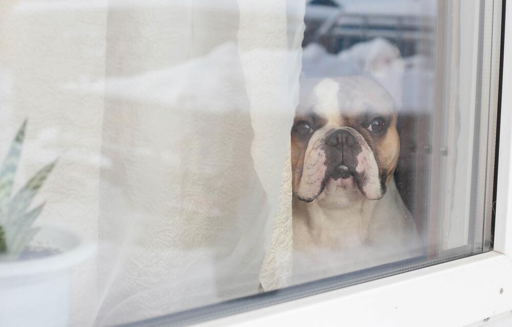 Ko bo karantene konec, bo trpelo veliko psov