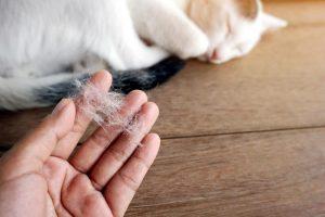 Mačja dlaka in kako se z njo spopasti