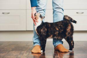Mikrosporija pri mački – kakšni so znaki