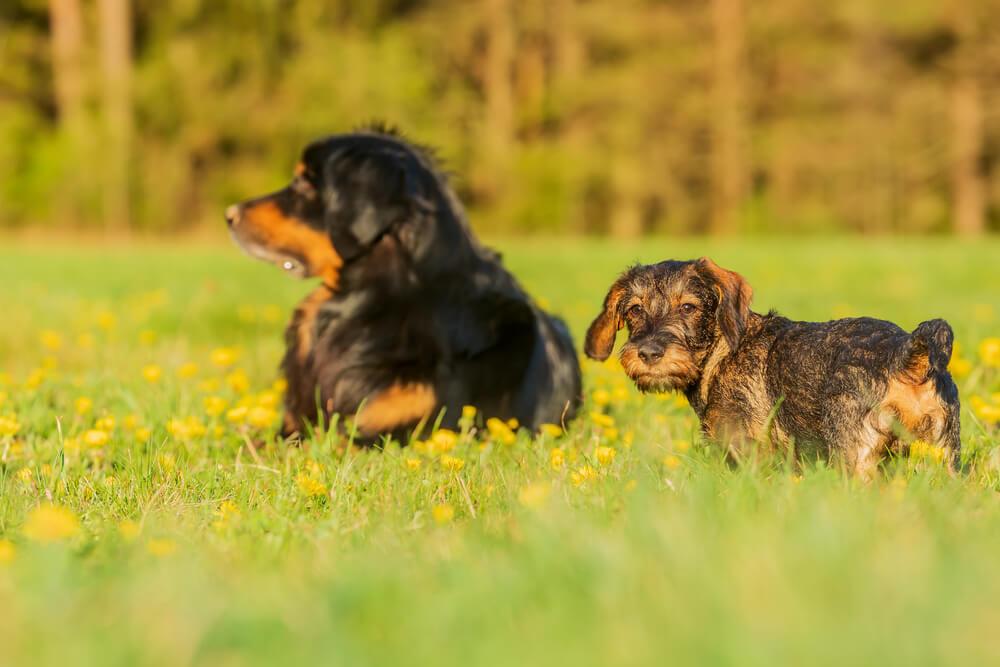 'Naravna zaščita mladičev' je samo mit
