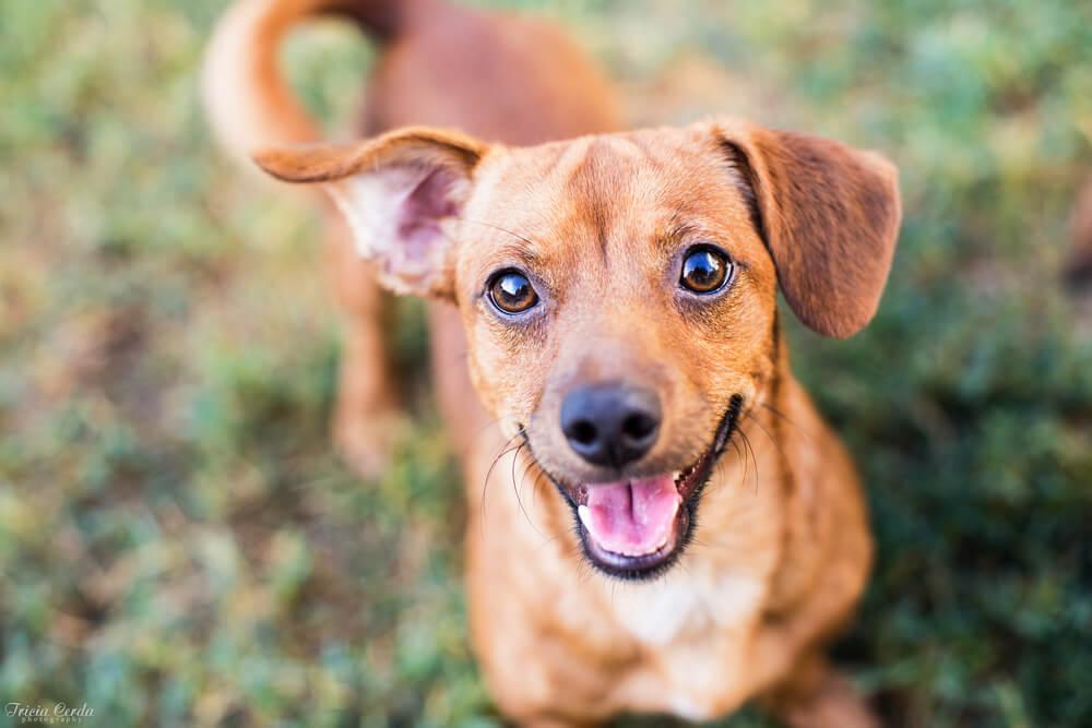 Se psi lahko smejijo?