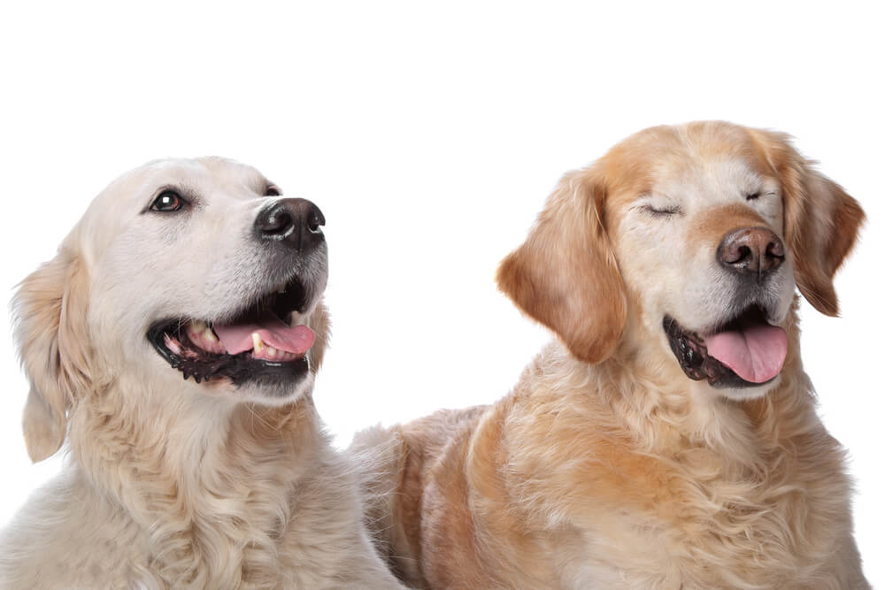 Ko pes oslepi, potrebuje naše zaupanje