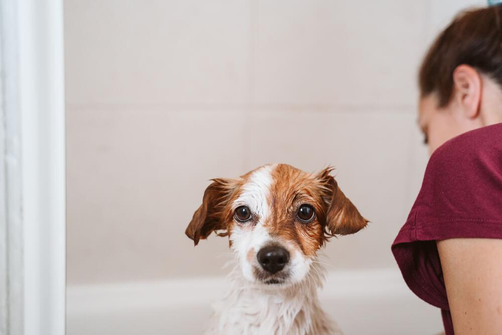 Vzroki, zakaj pes zaudarja