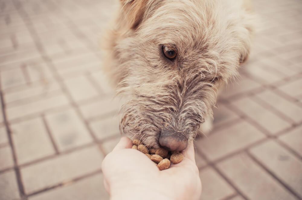 Prehrana starejših psov