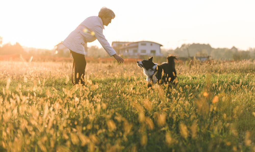 Poškodovano žensko rešila psa, ki sta naredila izjemen načrt