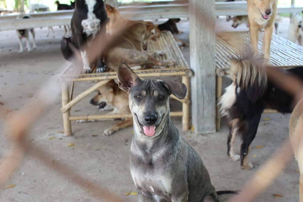 Kitajski Shenzhen prepovedal uživanje pasjega in mačjega mesa