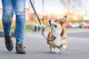 Ljudje neznancem za sprehod oddajajo svoje pse