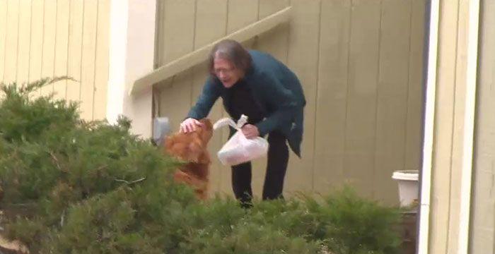 Zlati prinašalec Sunny v času karantene pomaga bolni sosedi