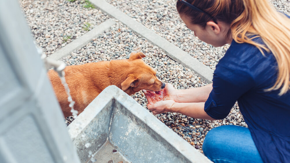 Turške oblasti v času karantene hranijo ulične živali