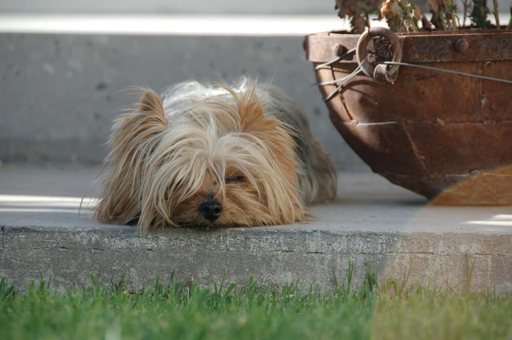 Po 14 letih se je ukradeni pes vrnil domov