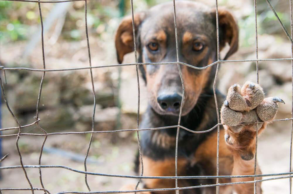V karanteni posvojene živali niso več tako privlačne in aktualne?