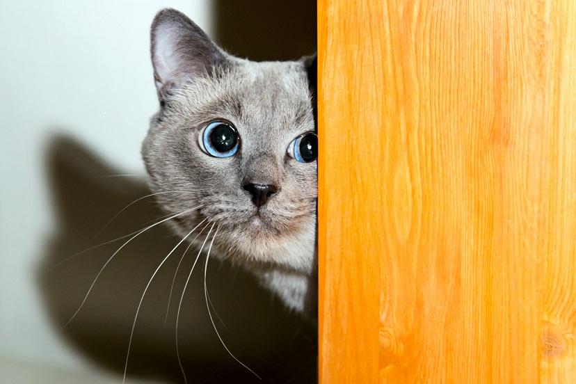 Miritveni signali pri mačkah