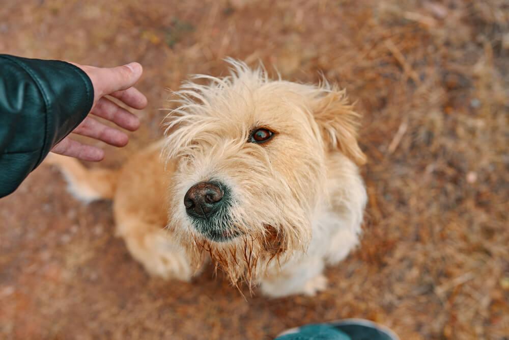 Kakšno je pravilno obnašanje do psov, ki jih ne poznamo?