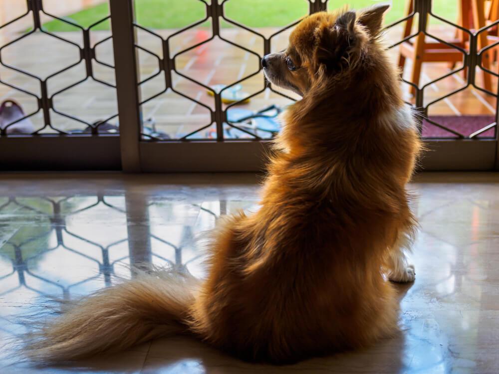 Pes v bolnišnici 3 mesece čakal za koronavirusom umrlega skrbnika