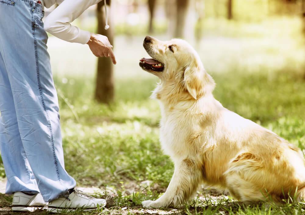 Ja, vaš pes vas razume!