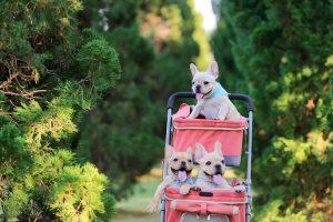 """Počlovečenje psov: """"Psom je treba zagotoviti, da so lahko psi"""""""