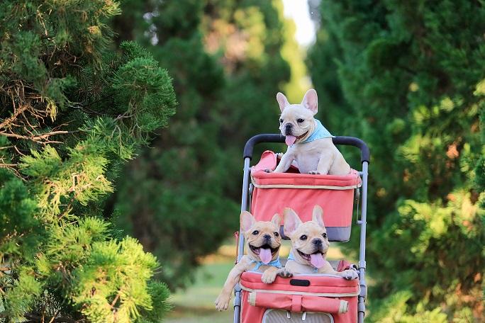 Počlovečenje psov: ''Psom je treba zagotoviti, da so lahko psi''