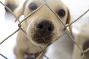 Bo imelo posvajanje psov v času karantene negativne 'pokarantenske' posledice?