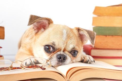 Nekateri psi že berejo: kako se lotiti učenja?