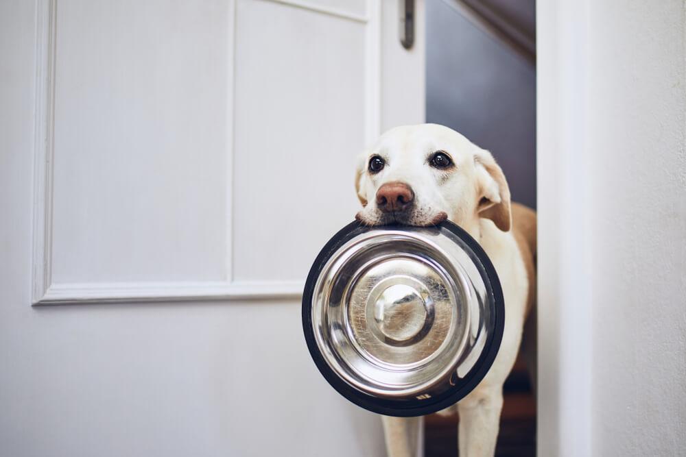 Red v pasji prehrani - hranjenje do minute natančno?