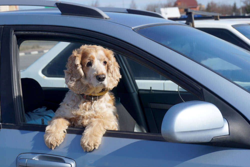 Vožnja z avtom – zlata pravila