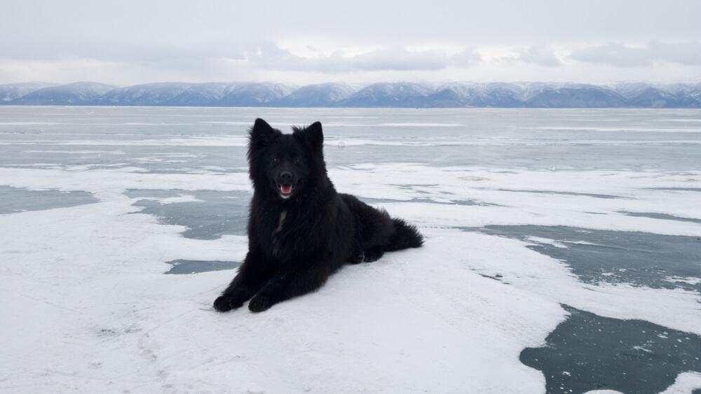 Zvest pes dva meseca čakal na ledu v upanju, da se lastnik vrne