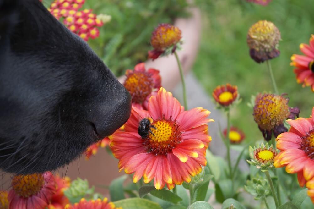 Kako se kaže alergija na čebelji pik?