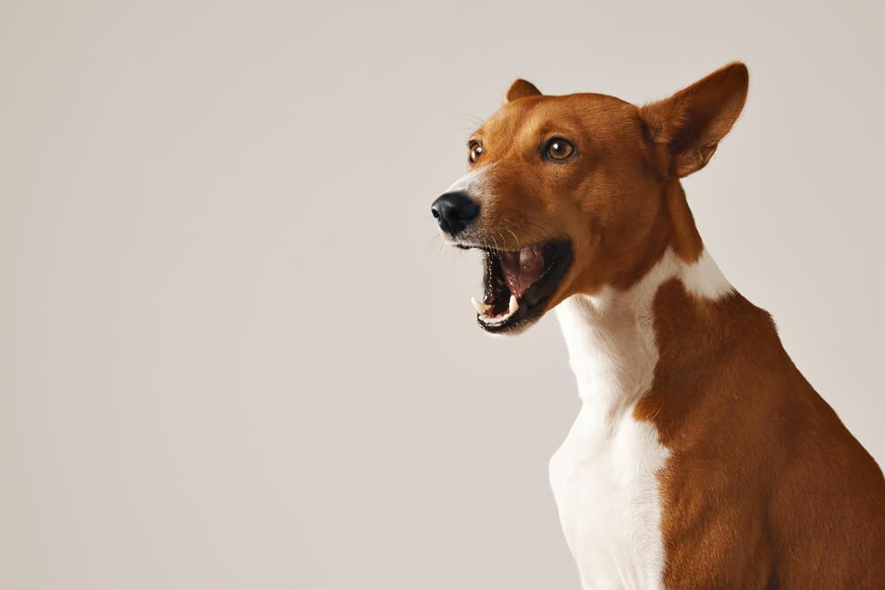 Kdaj pasje cviljenje in sopenje vzeti resno?
