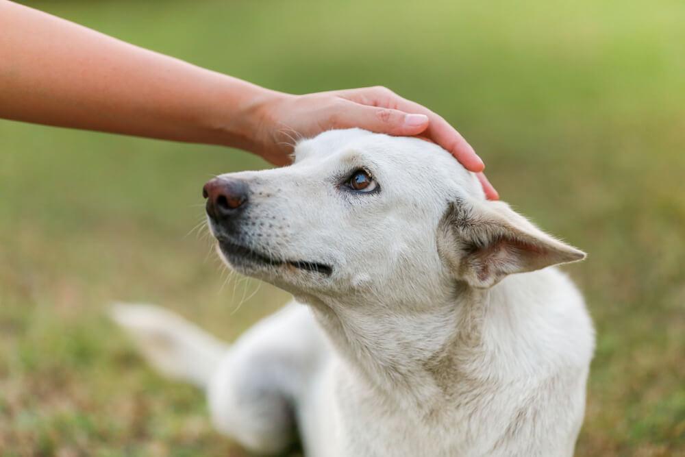 Hospic za pse, kjer neozdravljivo bolni kužki dobijo 'najboljše življenje'