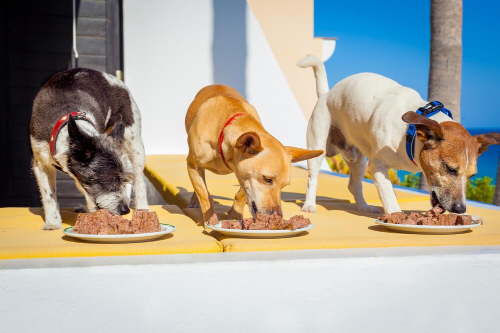 Hrana za pse na dopustu in v varstvu
