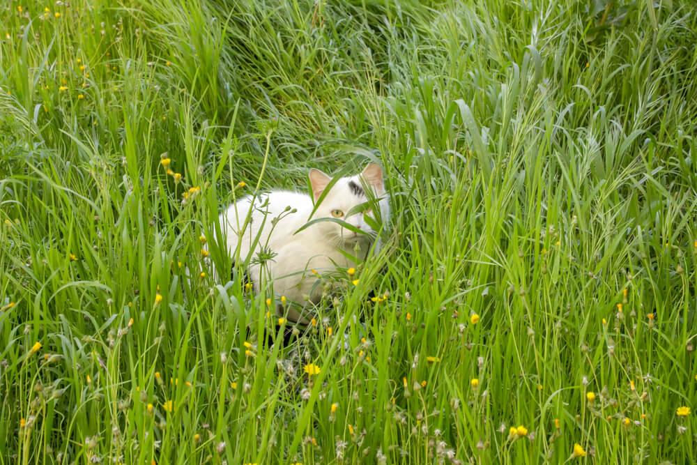 Previdno v času košnje trave