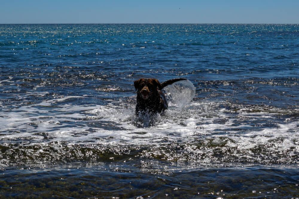 Kopanje v morski vodi je za pse priporočljivo