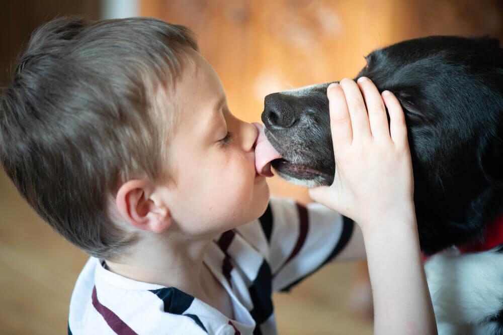 Labradorec Rader dečka z avtizmom povezuje s svetom