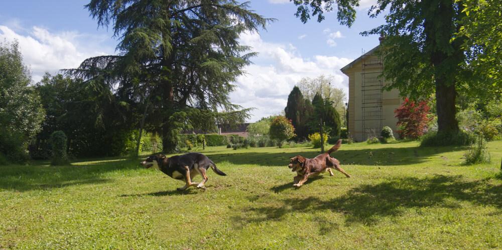 Po 21 dneh je svoja dva mlada psa lastnica našla v bližnjem silosu